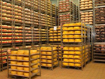Камера для вызревания сыров